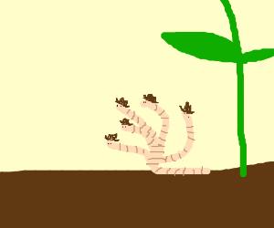 Cowboy five-headed earthworm