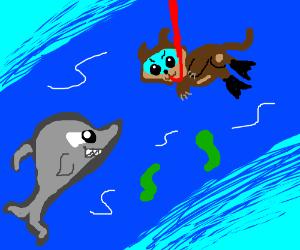 Shark vs Snorkelcat