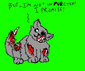 Deceptive zombie-kitten