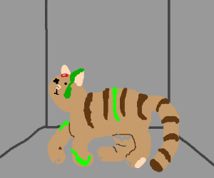Schrodinger's cat must choose life or death!