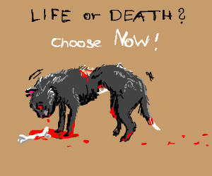 Do you want to let the zombie cat die? (Y/N)