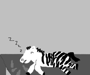 drunken zebra laying on table.