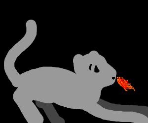 fire breathing cat!