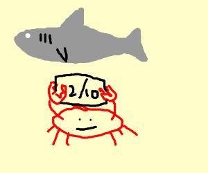 unimpressed crap grades a shark a 2/10