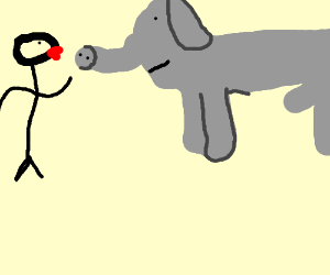man is about to make out with a guy elephant