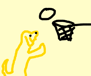 yellow lab plays basketball