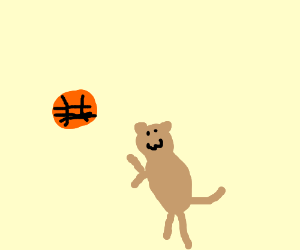 cat does basketball