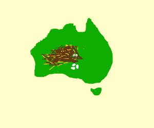 Australia, with an echidna