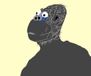concerned gorilla