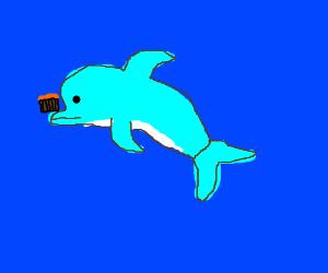 Dolphin balances cake on nose in ocean