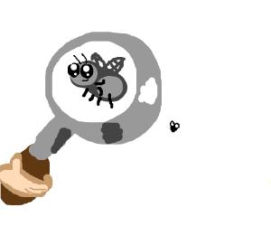 Oh hey, I found a fly.