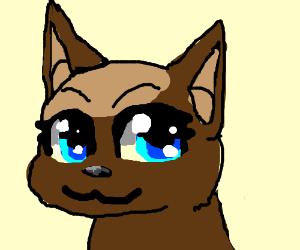 Desu's Anime Kitten