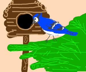 A blue bird in a hut.