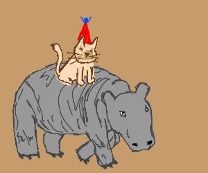 Happy Birthday hippo-riding cat!