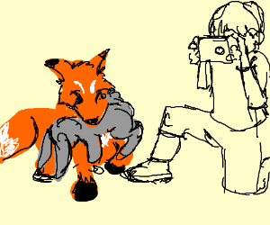 Fox attacks rabbit as person looks on.