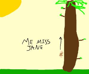 tarzan climbes a tall big tree