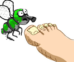 a foot and a fly