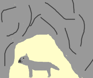 Wolf in a cave
