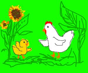 High chickens