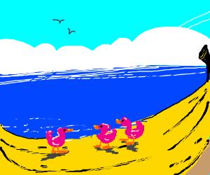 Pink ducks go to banana beach