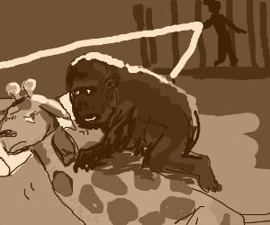 Gorilla: George they're onto us!