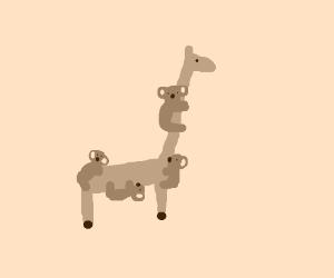 Climbing on a giraffe, he's highly koala-fied