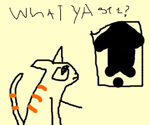 Rorschach test on a cat