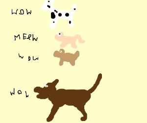 Dog. Dog. Cat. Dog.
