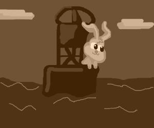 Rabbit on a bouy