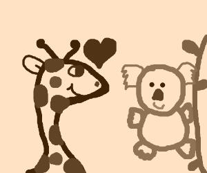Giraffe loves koala