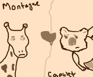 Giraffe and Koala- a forbidden love story.