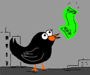 black bird finds dollar on the street