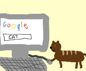 cat googles himself