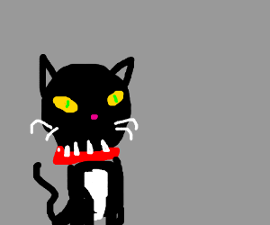 black cat sporting spiked collar of teeth