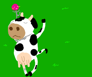 Dancing lollipop on a cow