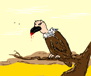 Vulture siting on twig stares at you intently