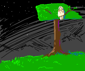 hoot owl in a hammer tree