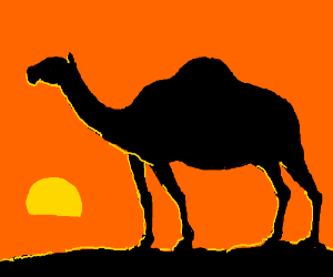 Dromedary walking in the sunset