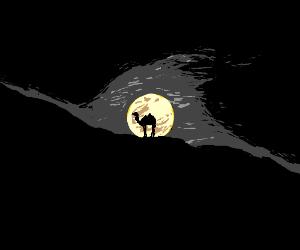 Dark Camel at Moon Rise