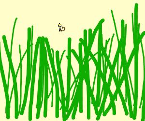 Len kata mine and monkey hybrid in grass
