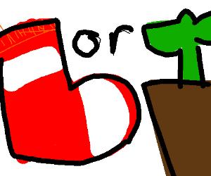 Socks, or plant?