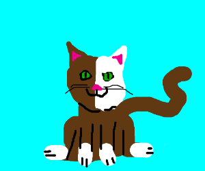 Brown & white cat with blue background boring!
