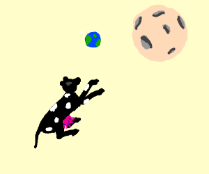 Cow attempts to jump the moon