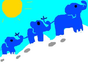 Blue elephants take epic trek over mountains
