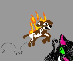 Cat gets a fiery revenge on fido