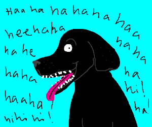 Dog laughing like an idiot