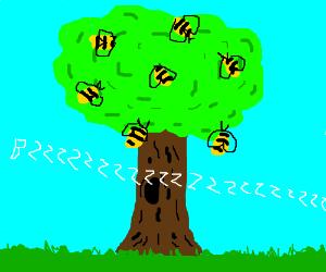 A bee tree
