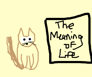 cat found the meaning of life