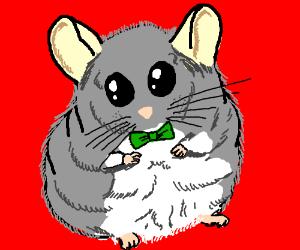 a cute chinchilla wears a bow tie