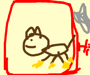 dog with yellow paws in a red box